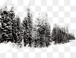 Tree, Download, Computer Icons, Fir, Pine Family PNG image with transparent background