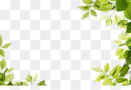 Leaf, Green PNG image with transparent background