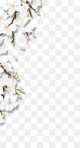 Flower, Download, White, Blossom PNG image with transparent background