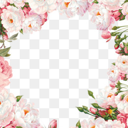 Flower, Picture Frames, Rose, Pink PNG image with transparent background