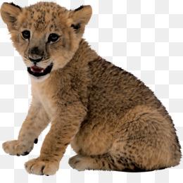 35640dc90c6 Puma PNG   Puma Transparent Clipart Free Download - Leopard Tiger ...