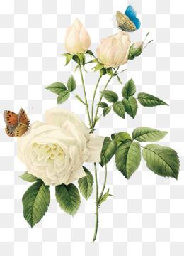 White Rose Png Black And White Rose White Rose Border White Rose