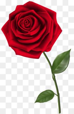 Rose Png Red Rose Rose Border Rose Vector Vintage Rose Rose