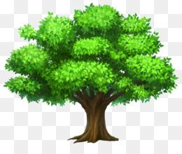 Tree, Cartoon, Oak, Plant, Leaf PNG image with transparent background