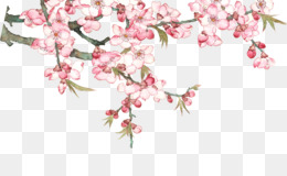 Durazno, Princess Peach, Qingming, Pink, Plant PNG image with transparent background
