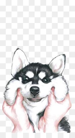 Siberian Husky, Bichon Frise, Labrador Retriever, Carnivoran, Dog Breed PNG image with transparent background