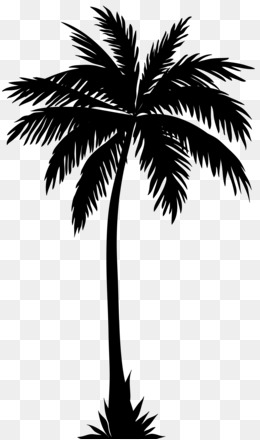 Arecaceae, Silhouette, Tree, Plant, Leaf PNG image with transparent background