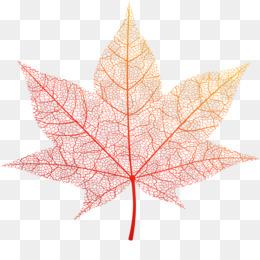 Leaf, Maple Leaf, Maple, Plant PNG image with transparent background