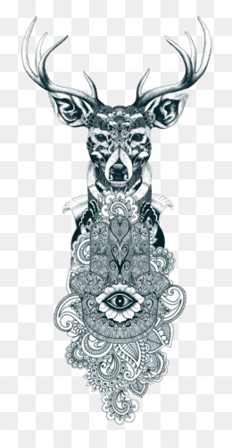 Deer, Reindeer, Gray Wolf, Visual Arts, Head PNG image with transparent background