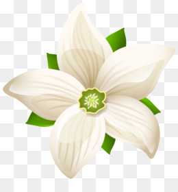 White flower png white flower transparent clipart free download white flower png white flower transparent clipart free download white flower white flowers mightylinksfo