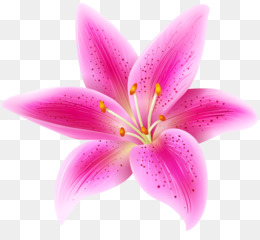 Arum Lily, Tiger Lily, Flower, Pink, Plant PNG image with transparent background