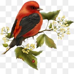 Bird, Hummingbird, Desktop Wallpaper, Old World Flycatcher, Beak PNG image with transparent background