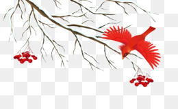 Bird, Owl, Winter, Plant, Flower PNG image with transparent background