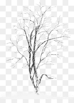 Tree, Snow, Winter, Line Art, Plant PNG image with transparent background