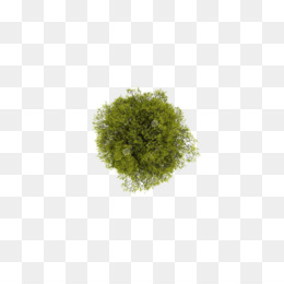 Tree, Plant, Download, Square, Pattern PNG image with transparent background