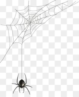 Spider, Spider Web, Black House Spider, Line Art, Product PNG image with transparent background