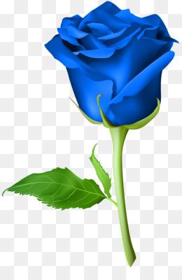 Rose, Blue Rose, Orange, Blue, Plant PNG image with transparent background