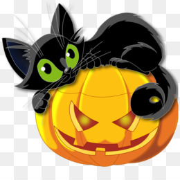 Cat, Kitten, Halloween, Small To Medium Sized Cats, Graphics PNG image with transparent background