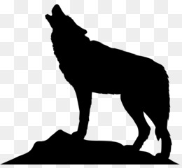 Gray Wolf, Silhouette, Photography, Monochrome Photography PNG image with transparent background