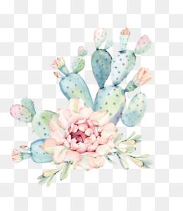 Cactaceae, Tapestry, Succulent Plant, Flower, Petal PNG image with transparent background