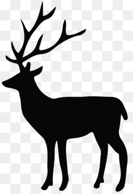 Deer, White Tailed Deer, Moose, Elk, Wildlife PNG image with transparent background