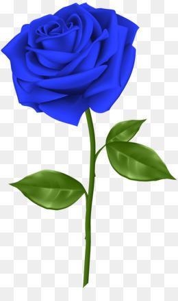 Free Download Blue Rose Flower Clip Art Blue Rose Transparent Png