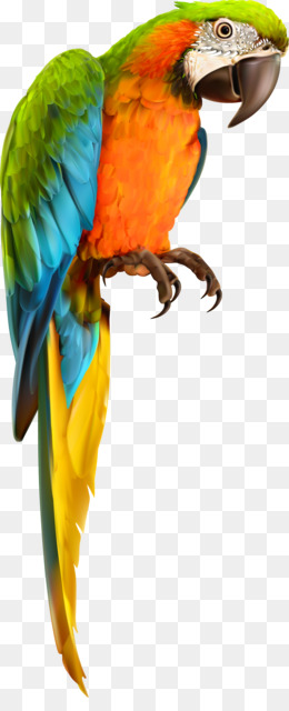 Parrot, Bird, Chimpanzee, Macaw PNG image with transparent background