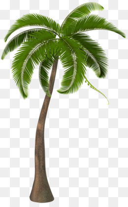Palm Leaf PNG And PSD Free Download