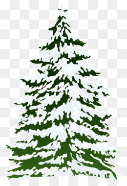 Fir, Spruce, Pinus Palustris, Christmas Ornament PNG image with transparent background