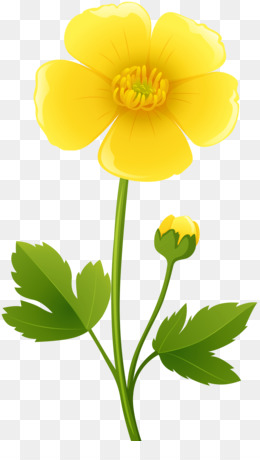 Ranunculus Bulbosus, Flower, Yellow, Plant PNG image with transparent background