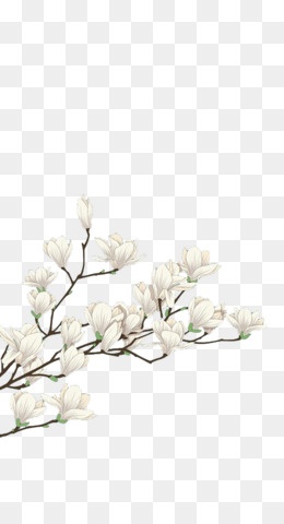 White flower png white flower transparent clipart free download png mightylinksfo