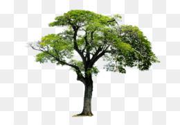 Tree, Monomer, Acrylonitrile Butadiene Styrene, Plant, Leaf PNG image with transparent background