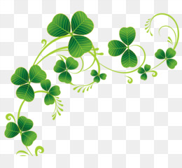 Ireland, Shamrock, Saint Patrick S Day, Plant, Flora PNG image with transparent background