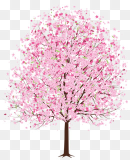 National Cherry Blossom Festival, Cherry Blossom, Blossom, Pink, Plant PNG image with transparent background
