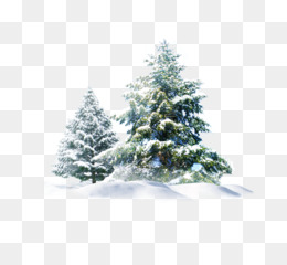 Snow, Tree, Desktop Wallpaper, Fir, Pine Family PNG image with transparent background