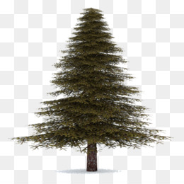 Christmas Tree Transparent Background.Free Download Spruce Christmas Ornament Fir Pine Christmas
