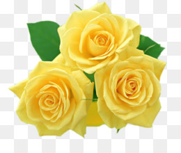 Yellow Rose Png Yellow Rose Flower Yellow Rose Bouquet Single