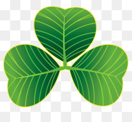 Saint Patrick S Day, Shamrock, Clover, Green, Plant PNG image with transparent background