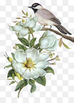 Bird, Flower, Bird And Flower Painting, Plant, Flora PNG image with transparent background
