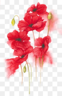 Watercolour Flowers, Flower, Red, Plant PNG image with transparent background