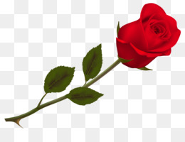 Rose, Valentine S Day, Propose Day, Plant, Flower PNG image with transparent background