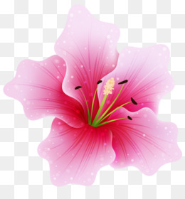 Flower, Pink Flowers, Pink, Hibiscus PNG image with transparent background