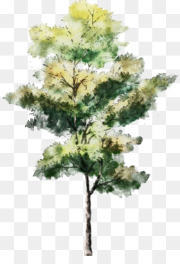Watercolor Painting, Tree, Drawing, Evergreen, Pine Family PNG image with transparent background
