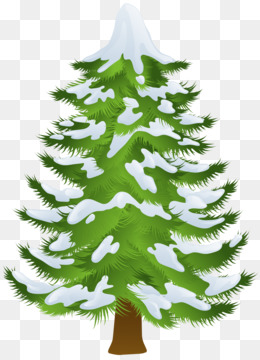 Pine, Tree, Winter, Fir, Pine Family PNG image with transparent background