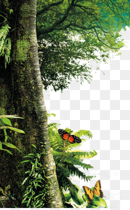 Tree, Forest, Download, Biome, Plant PNG image with transparent background