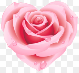 Rose, Pink, Heart PNG image with transparent background