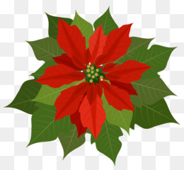 christmas poinsettia png and psd free download poinsettia clip art rh kisspng com christmas poinsettia clip art free