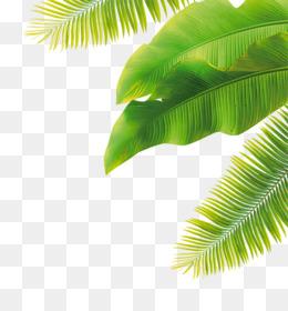 Banana Leaf, Leaf, Banana, Plant PNG image with transparent background