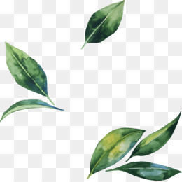 Leaf, Flower, Watercolor Painting, Green PNG image with transparent background