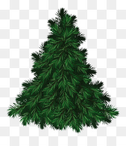 Fir Tree PNG Transparent Clipart Free Download